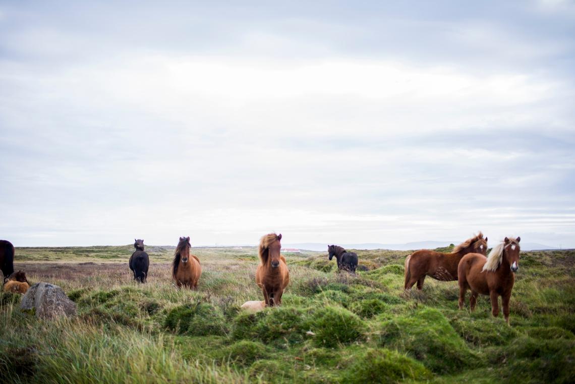 Hey nous, on bouffe de l'herbe et des graines, on a les cheveux longs, et on a trop la classe. D'abord.