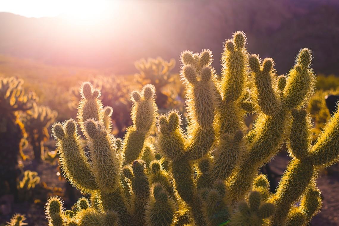 """""""Le monde entier est un cactus"""" disait ce bon vieux Jacques, mais ça peut être carrément chouette un cactus !"""