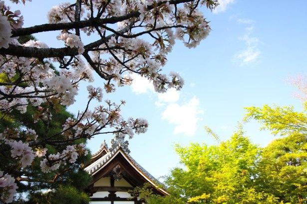 Du coup, j'ai décidé d'illustrer cet article avec quelques unes de mes photos du Japon, même si ça n'a aucun rapport.